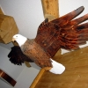 Eagle woodcarving