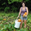 Winter Luxury Pie Pumpkin. Lyndsey harvesting.
