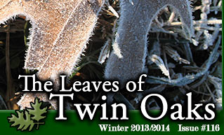 Leaves Newsletter Winter 2013